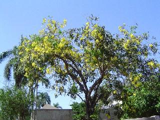 Flowers In Ghana April 2005
